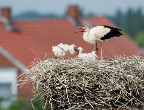 Naturschätze im Elbe-Biosphärenreservat bewahren – Landesregierung unterstützt Förderverein mit knapp 5.000 Euro